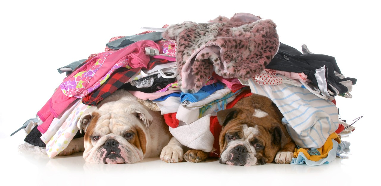 dogs-under-laundry.jpg